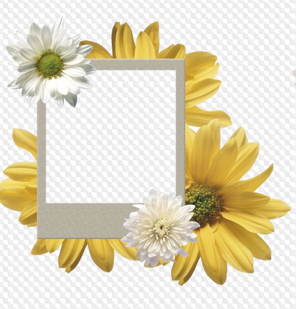 Polaroid frames png, download - free 28 polaroid photo frames ...
